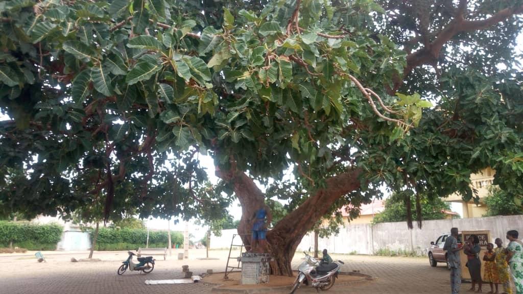 Photos: Modeste Zinsou (Office du tourisme de Ouidah).